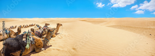 Camels are resting during break time, waiting of tourists. Sahara desert. Tunisia, North Africa