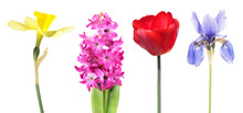 Four Species Of Popular Spring...