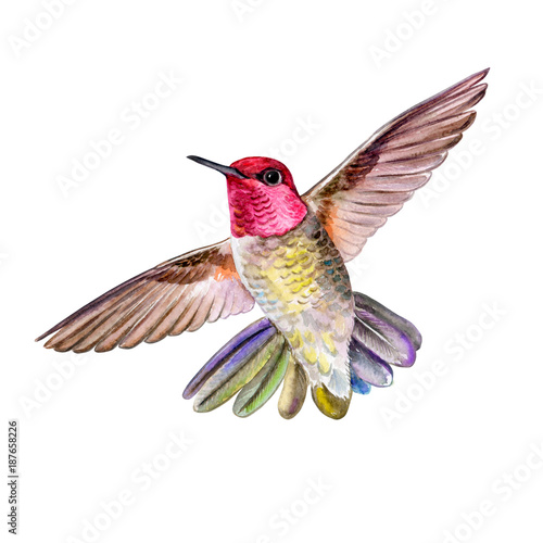 Poster Geometrische dieren Hummingbirds are in flight isolated on white background. Watercolor. Illustration. Template. Handmade