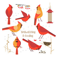 Birdwatching, Bird Feeding Icon Set. Red Northern Cardinals Pose Comic Flat Cartoon. Birds Straw Nest, Feeder, Sunflower Seeds. Minimalism Simplicity Design. Wildlife Banner Sign. Vector Illustration