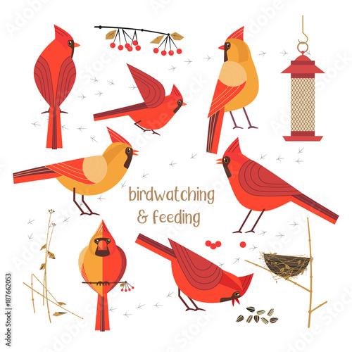 Cuadros en Lienzo Birdwatching, bird feeding icon set