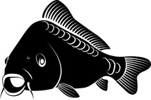 Isolated Carp Fish