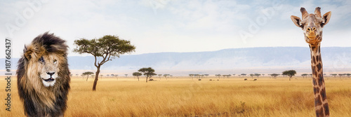 Fotobehang Leeuw Africa Safari Web Header Lion and Giraffe