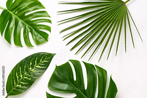 Creative Tropical Fresh Palm Leaves Set Fototapeta