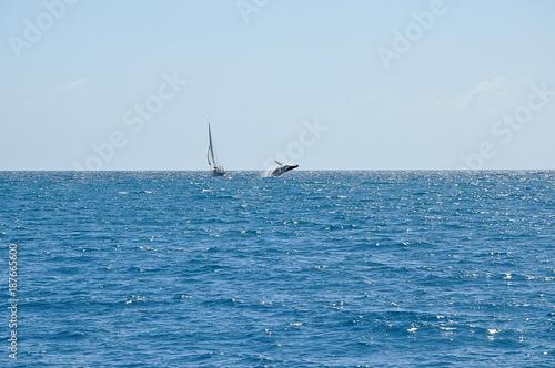Photo  A whale breaching near a sailing boat at sea