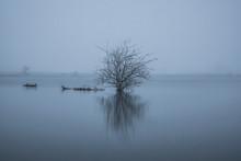 Bare Tree In Lake Against Sky ...
