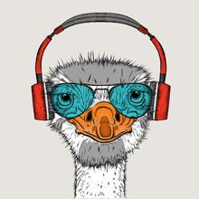 Portrait Of An Ostrich In Head...