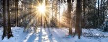 Wald Panorama Im Winter Mit Sc...