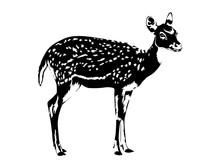 Spotted Deer Silhouette In Bla...