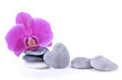 orchid, pebbles, heart, stone, flower, pink, stacked, beauty, wellness, romantic, love, isolated, white, background