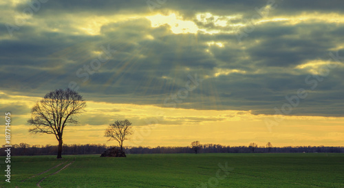 Early spring or late autumn field or meadow in the rays of the setting sun. Rural landscape. Silhouetted tree against the sky.