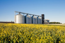 Four Silver Silos In A Wheat F...