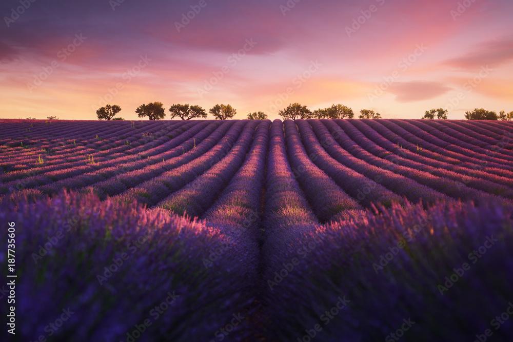 Lavande Provence France
