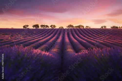 Photo Stands Lavender Lavande Provence France