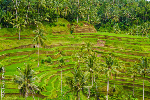 View of the Tegallalang rice terrace and Subak (irrigation system) in Ubud, Bali, Indonesia.