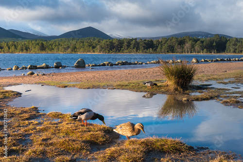 Photo Loch Morlich (Mhurlaig)near Aviemore within the Cairngorms National Park in the Highlands of Scotland