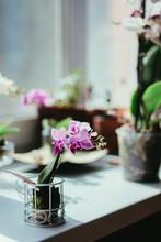 Phalaenopsis Mini - Beautuful ...