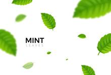 Green Eco Mint Leaf Background. Ecology Mint Pattern Design Plant Illustration