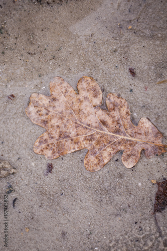 Papiers peints Cappuccino lonely leaf in a puddle