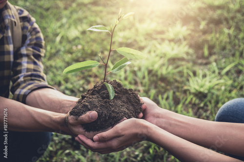 Cuadros en Lienzo Young couple carrying a seedlings to be planted into the soil in the garden as s