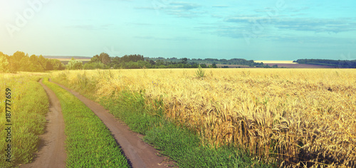 Sunny summer landscape with dirt rural road and wheat field.Dusk.Rural scene.