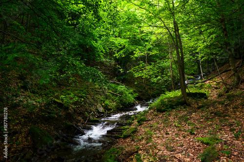 Vászonkép small rapid brook in green forest