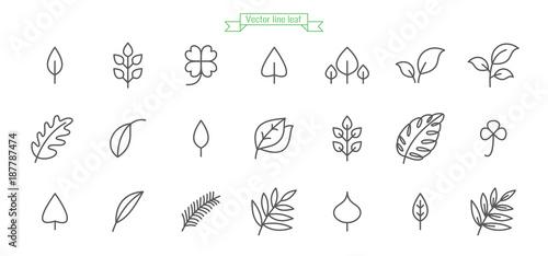 Liść, liście, linia, ikona, cienki, prosty, wektor, zestaw