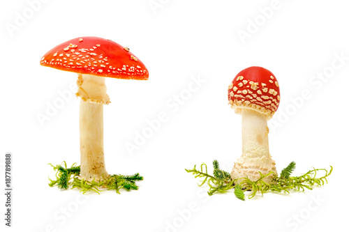 Fly agaric or fly Amanita mushroom on a white background Wallpaper Mural