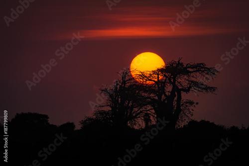 Mussulo - o sol a por-se por trás de um embondeiro. Província de Luanda, Angola.