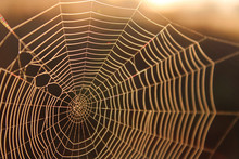 Macro Shot Of A Spider Web In ...
