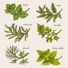 Set Of Herbs For Kitchen. Basi...
