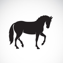 Vector Of A Horse Isolated On ...