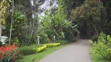 Pathway Through A Tropical, Bo...
