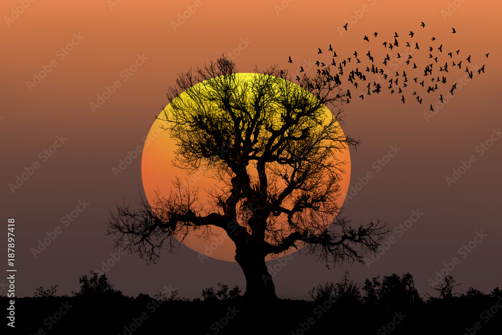 Lone tree with sun at sunset