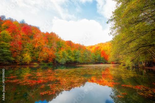 Foto op Plexiglas Herfst Autumn landscape in (seven lakes) Yedigoller Park Bolu, Turkey