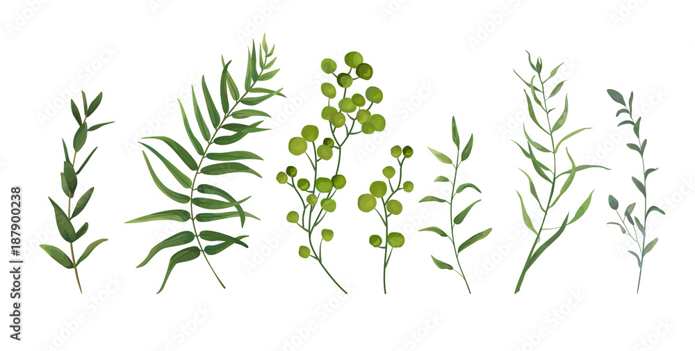 Fotografía  Vector designer elements set collection of green forest fern, tropical palm green berry greenery art foliage natural leaves herbs in watercolor style