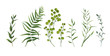 Vector designer elements set collection of green forest fern, tropical palm green berry greenery art foliage natural leaves herbs in watercolor style. Decorative beauty elegant illustration for design