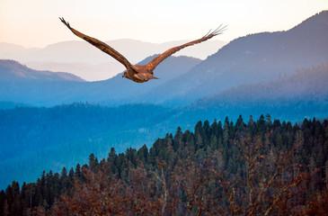 Fototapeta Ptaki Red-tailed Hawk