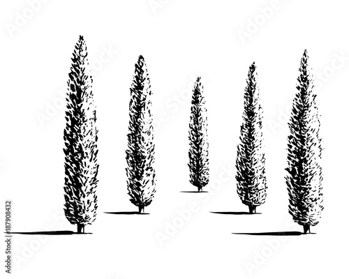 Set of Mediterranian, Italian or Tuscan cypresses illustration Fototapet