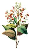 Motyw botaniczny. - 187909698