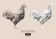 Roosters Vector Hand-drawn Illustration