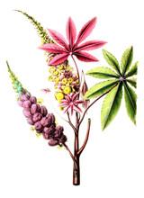The Botanical Theme.