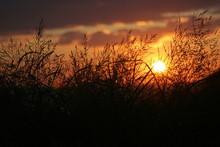 Sunset Through Blades Of Grass