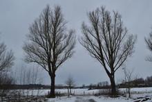 Abelen In De Sneeuw En Tegen D...