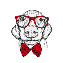 Puppy In A Glasses And A Tie. ...