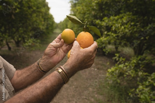 Farmer holding orange fruit