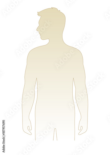Blank Male Body Template Vector Illustration Front View Torso