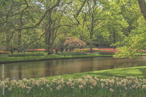 Photo  Blooming flowers in park