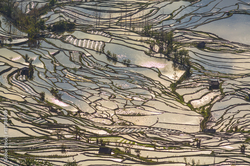 Garden Poster Rice fields Terraced Rice Fields Scenery in Spring Water Season in South China