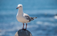 Seagull Perching On Rock By Th...